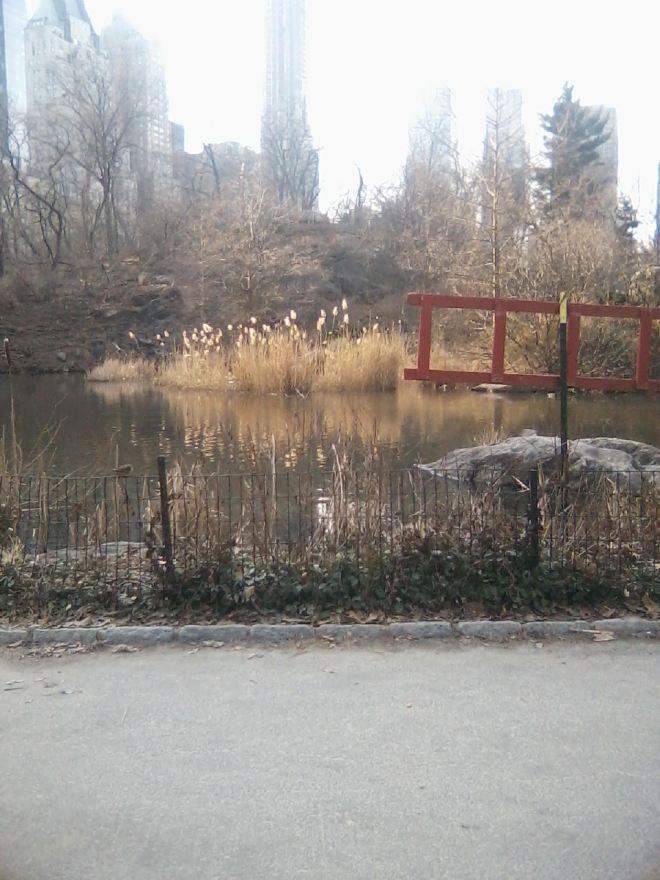 2-22-17_centralpark